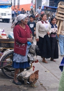 chicken-vendor-in-the-market-san-cristobal-san-cristobal-de-las-casas